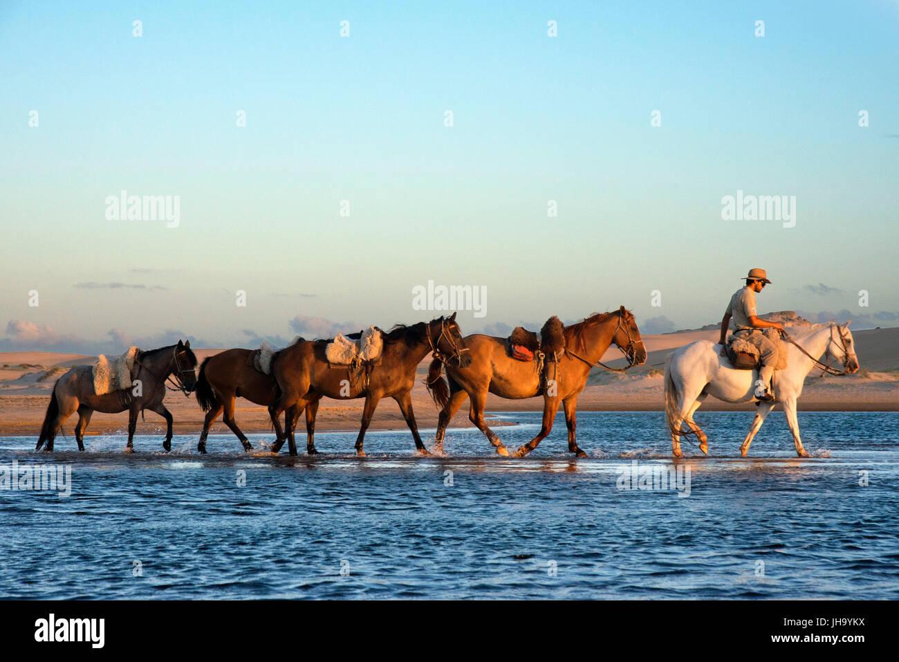 Promenade à cheval à partir de Cabo Polonio à Barra de Valizas, Rocha, Ministère de l'Uruguay. Photo Stock