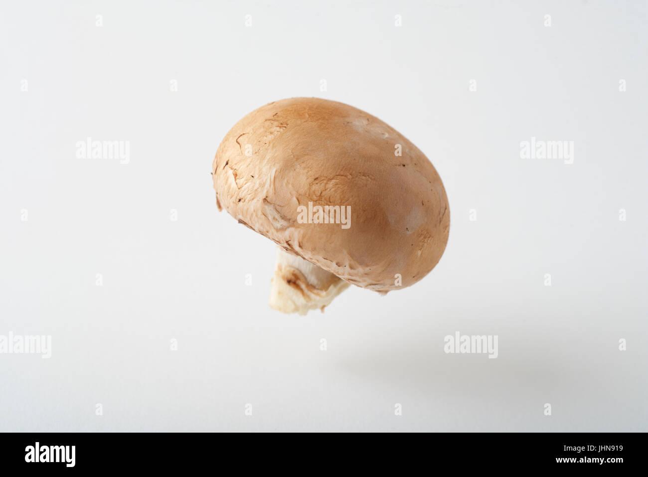 Un champignons cremini comme produire photographié dans un studio, suspendu au-dessus d'un arrière-plan transparent, Banque D'Images