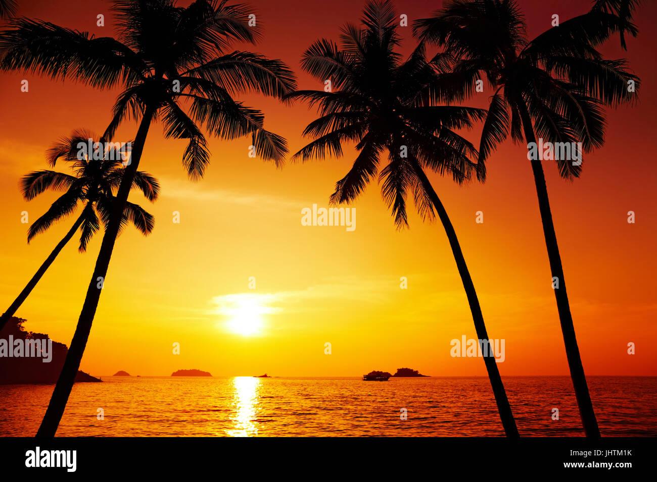 Silhouette de palmiers au coucher du soleil, Chang island, Thaïlande Photo Stock