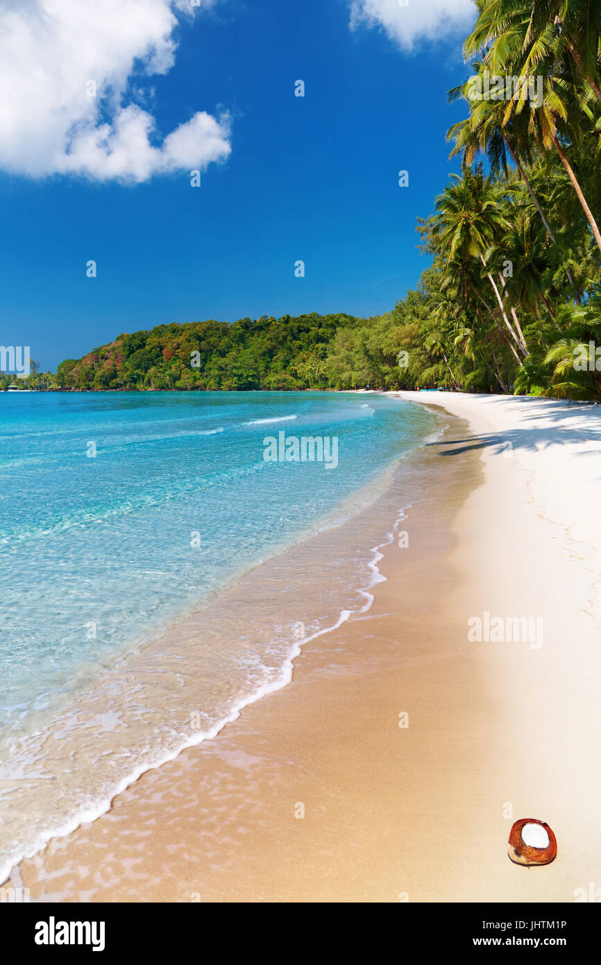 Le cocotier sur la plage, Thaïlande, île Kood Photo Stock