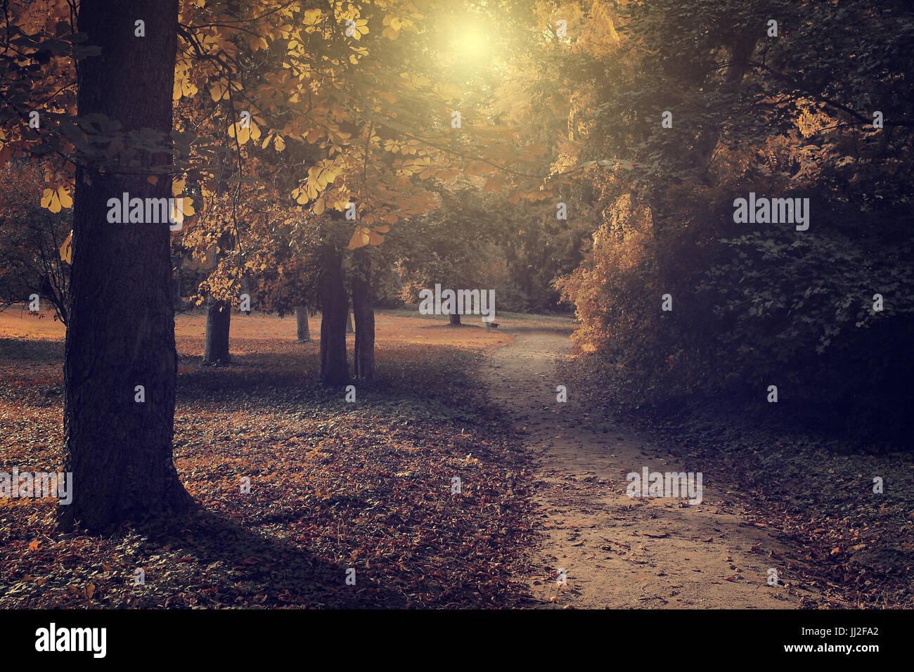 Vintage photo de forêt sombre Photo Stock
