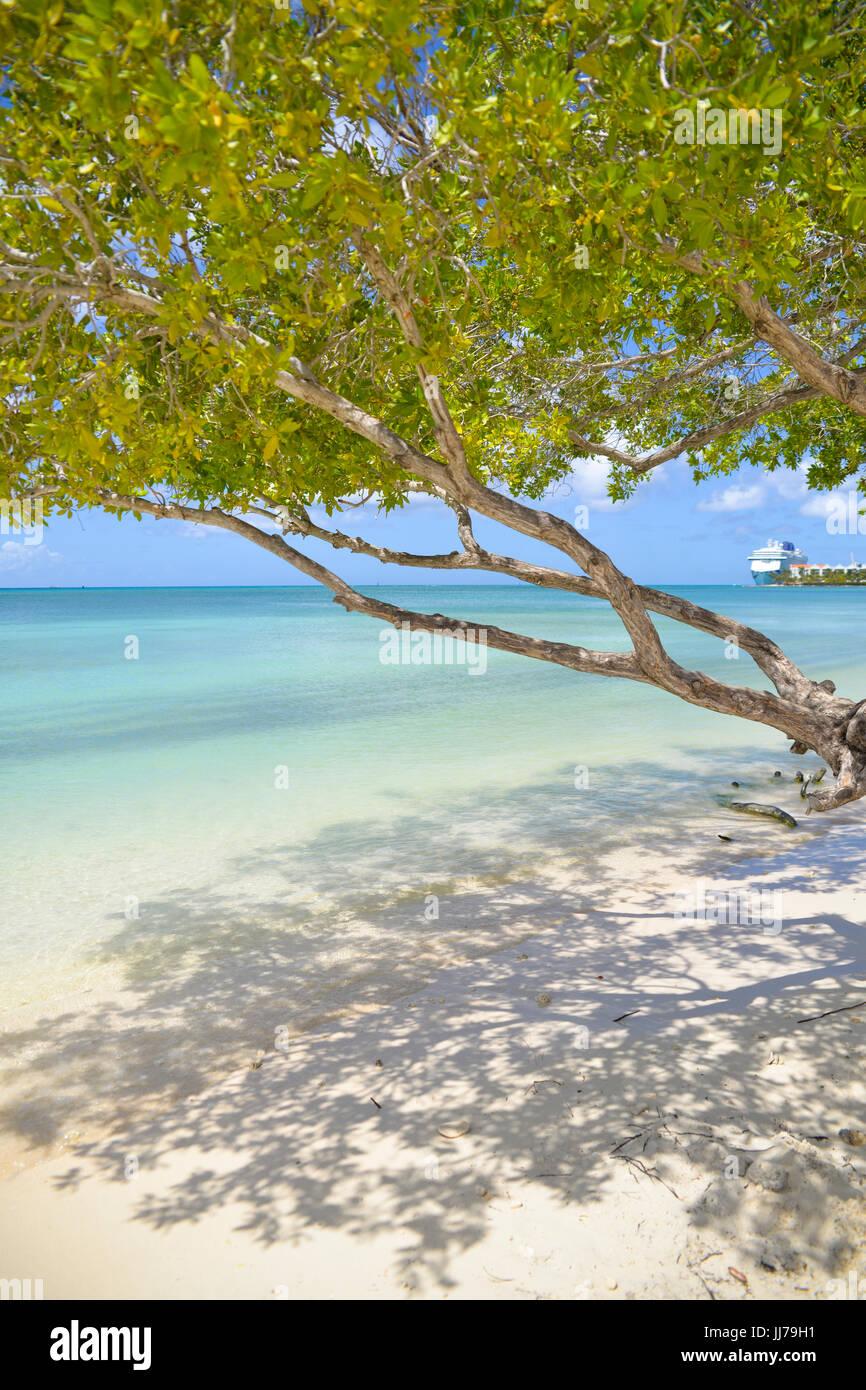 Vue sur l'océan avec un arbre sur la plage à Aruba, Antilles Photo Stock