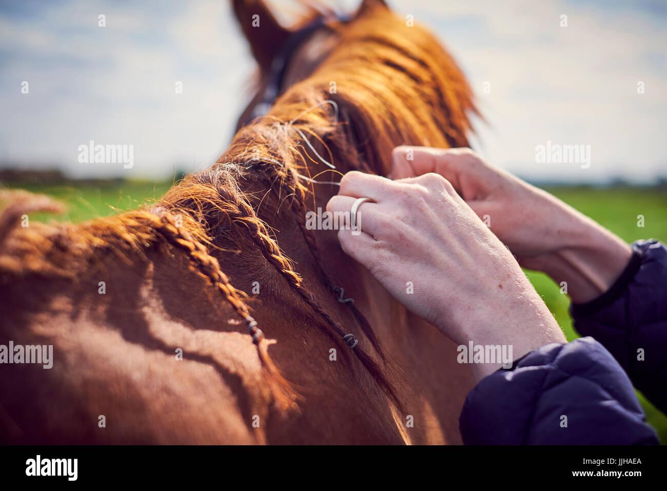 Une jeune femme se toiletter son cheval dans un enclos. Photo Stock