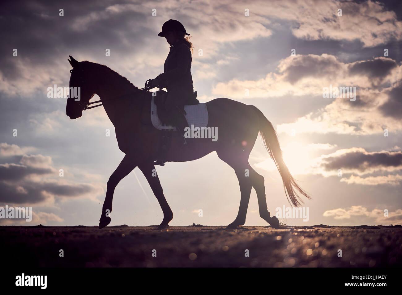 A cheval sur la plage au coucher du soleil. Photo Stock