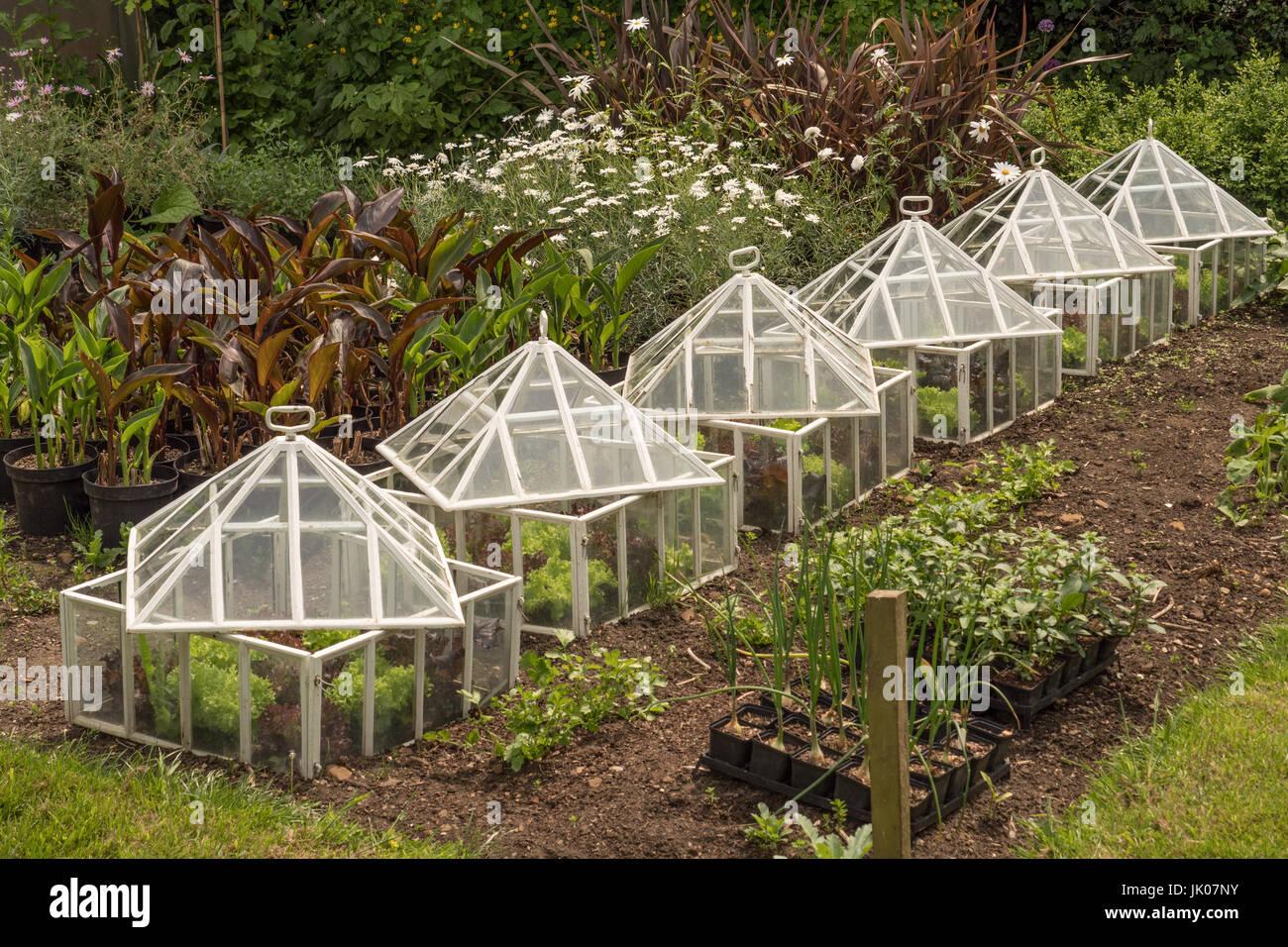 Vieux Jardin Cloches De Verre Elegant Banque D Images Photo