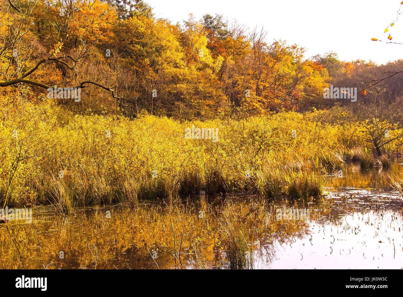 Domaine de la banque d'un étang de la forêt au milieu d'une pause à l'automne bois-uferbereich waldweihers colorés, von inmitten eines dans bruchwaldes herbstfarben Banque D'Images