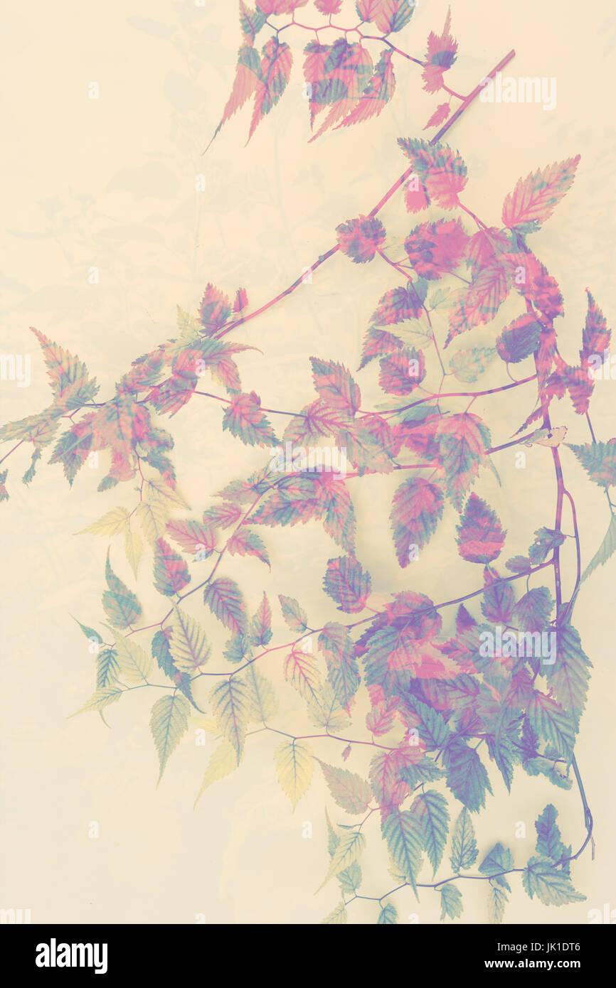 Floral background artistique, avec la branche de feuilles Photo Stock