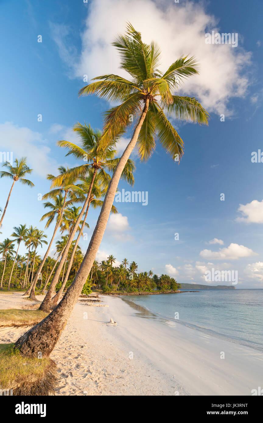 Cocotiers sur la péninsule de Samana, République Dominicaine Photo Stock