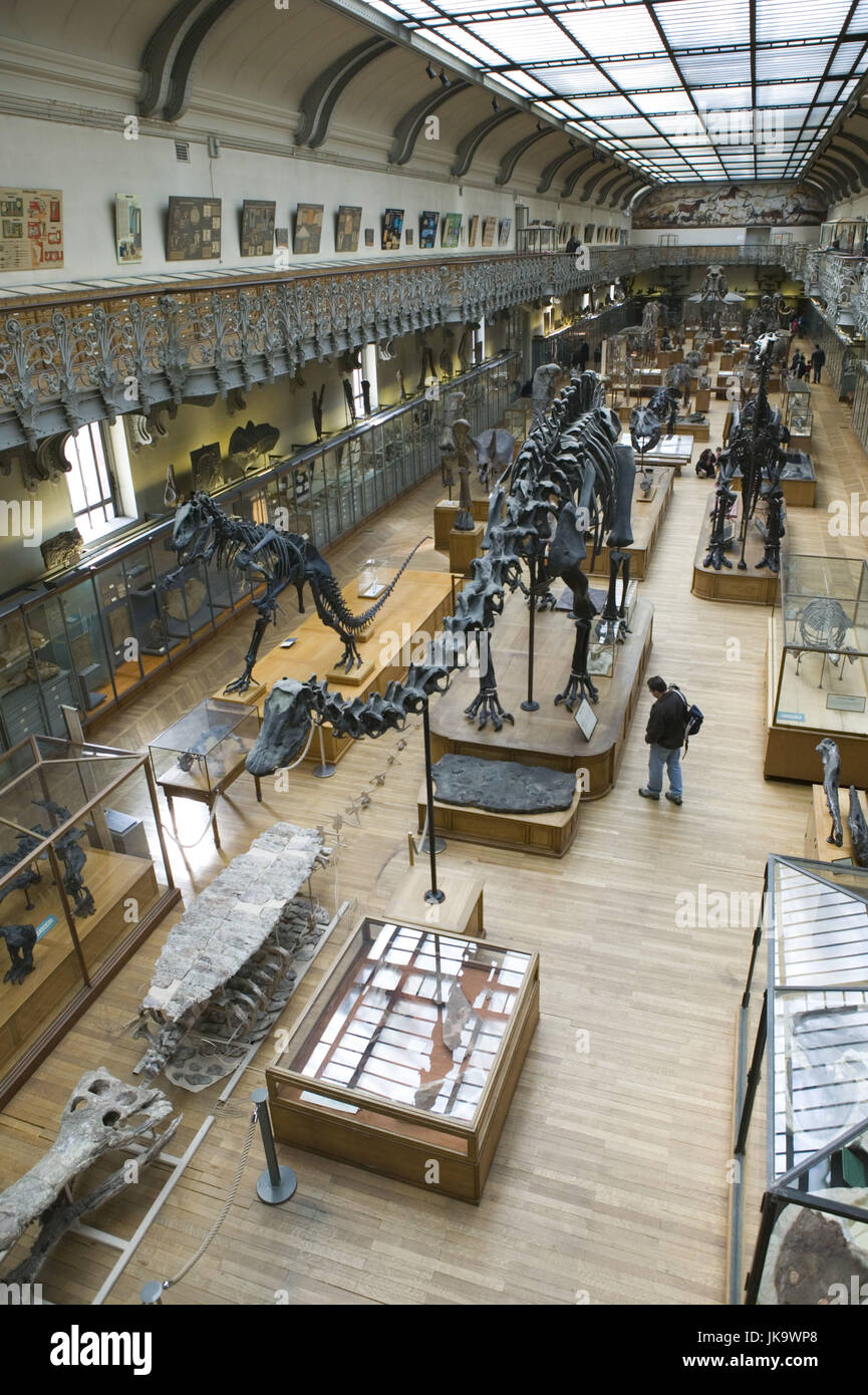 Frankreich, Paris, Musée National d'Histoire Naturelle, Halle, Besucher, Tierskelette, Saurier, betrachten, Photo Stock
