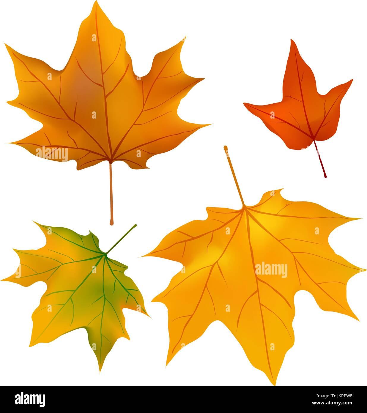 Le feuillage plantes feuilles d 39 rable feuille d 39 rable fond motif dessin automne vecteurs et - Feuille erable dessin ...