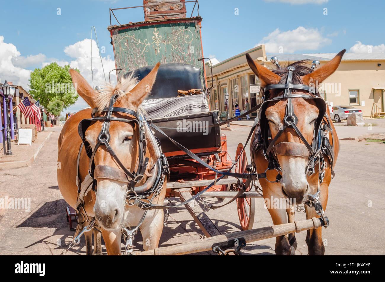 Mules tirez stagecoach sur la rue principale de Tombstone en Arizona Banque D'Images