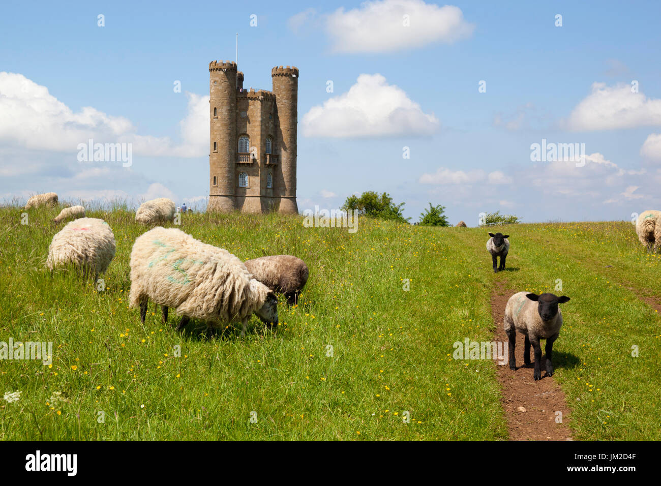Broadway Tower et les moutons, Broadway, Cotswolds, Worcestershire, Angleterre, Royaume-Uni, Europe Photo Stock