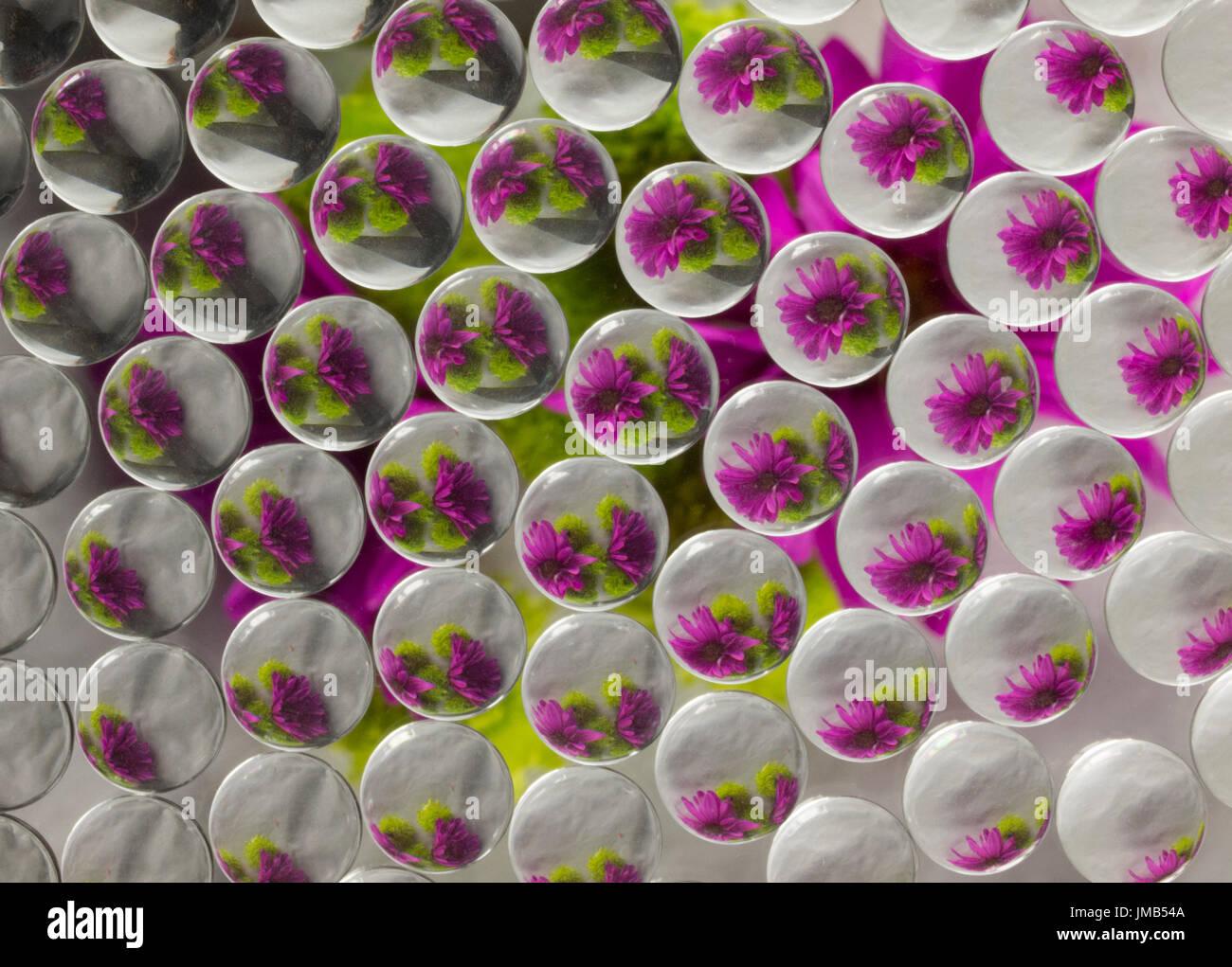 La réfraction 8 Fleurs Photo Stock