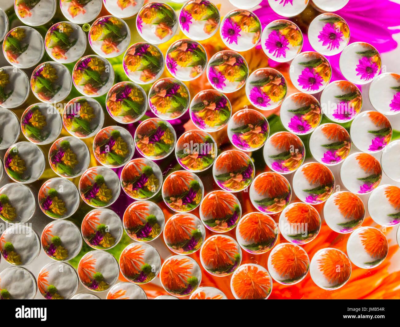 La réfraction 1 Fleurs Photo Stock