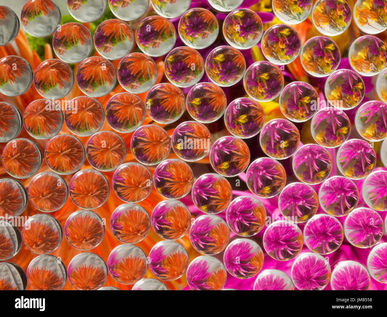 La réfraction 4 Fleurs Photo Stock