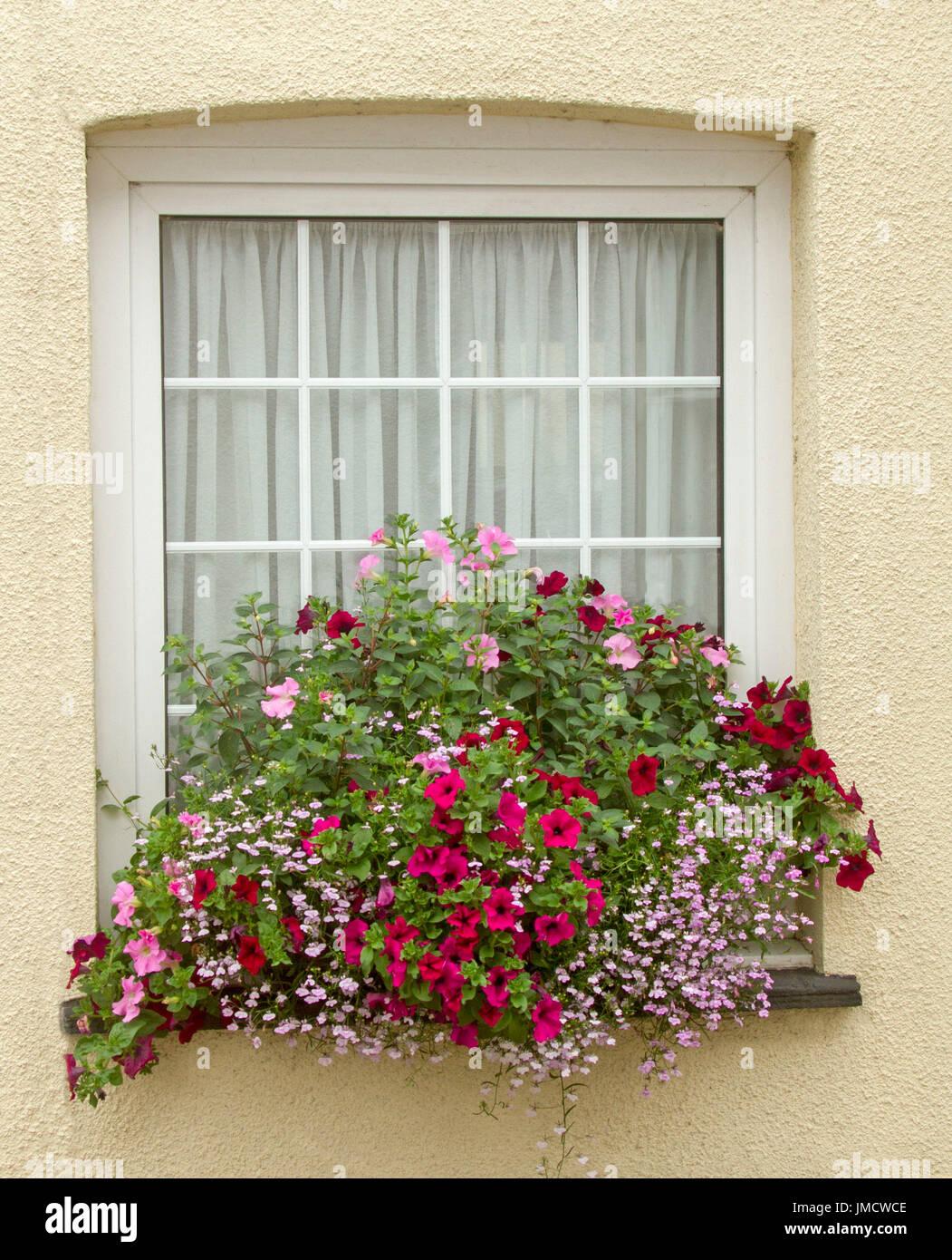 Couleur Vert Emeraude Foncé masse de fleurs aux couleurs vives, inc. rouge foncé et de
