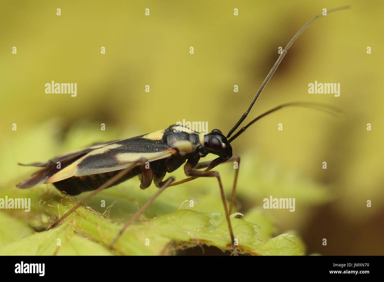 Macro photographie d'insectes Banque D'Images