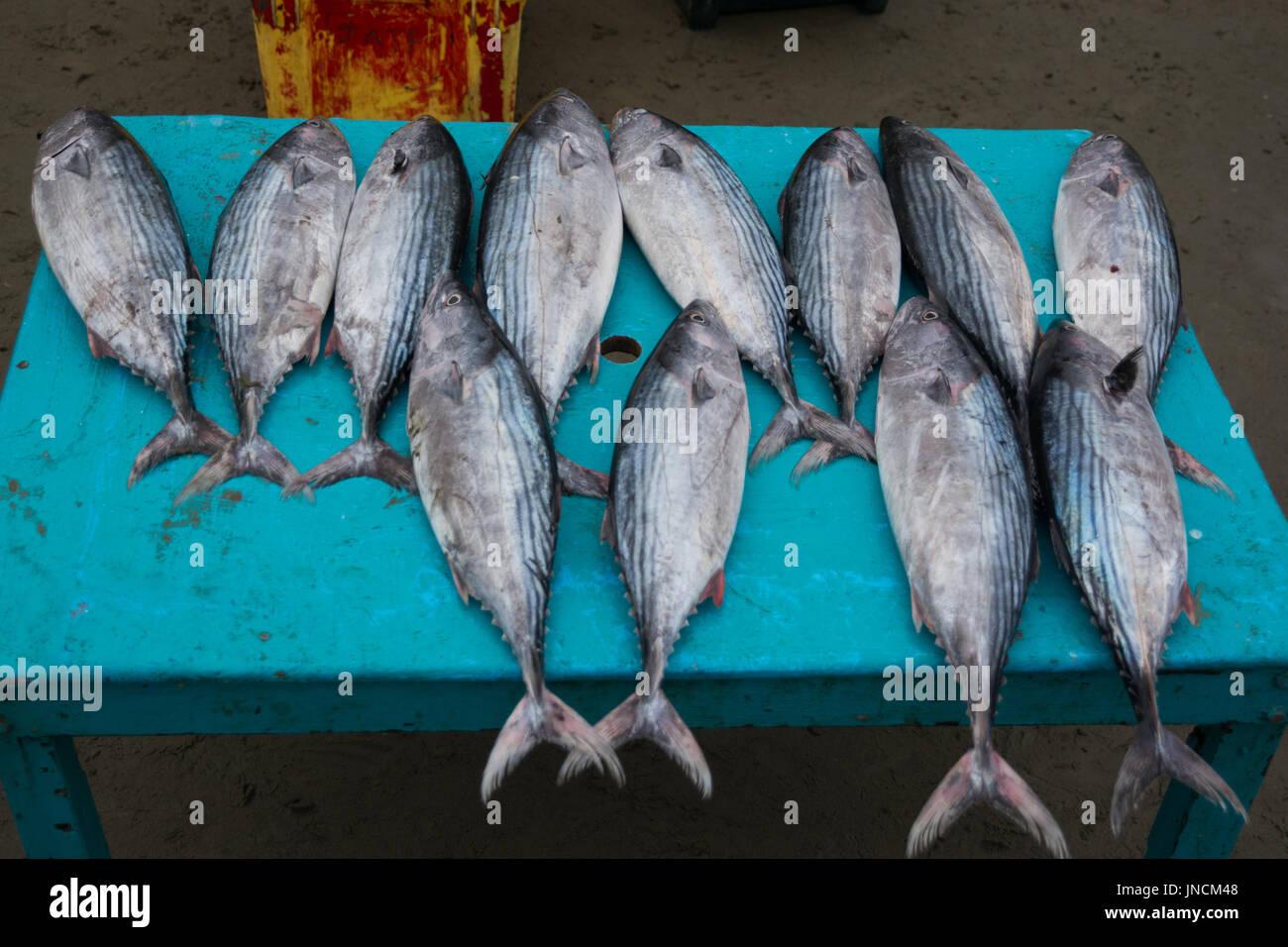 Marché de pêche à Puerto Lopez, Équateur Photo Stock