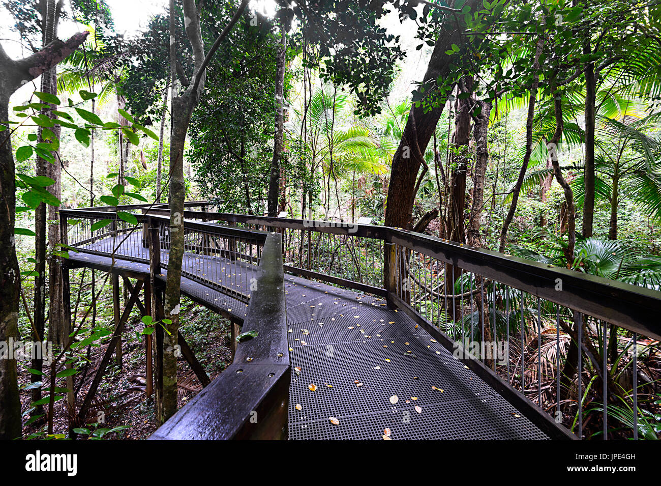 Promenade à travers la forêt en Mer Acres Rainforest Centre, Port Macquarie, New South Wales, NSW, Australie Photo Stock