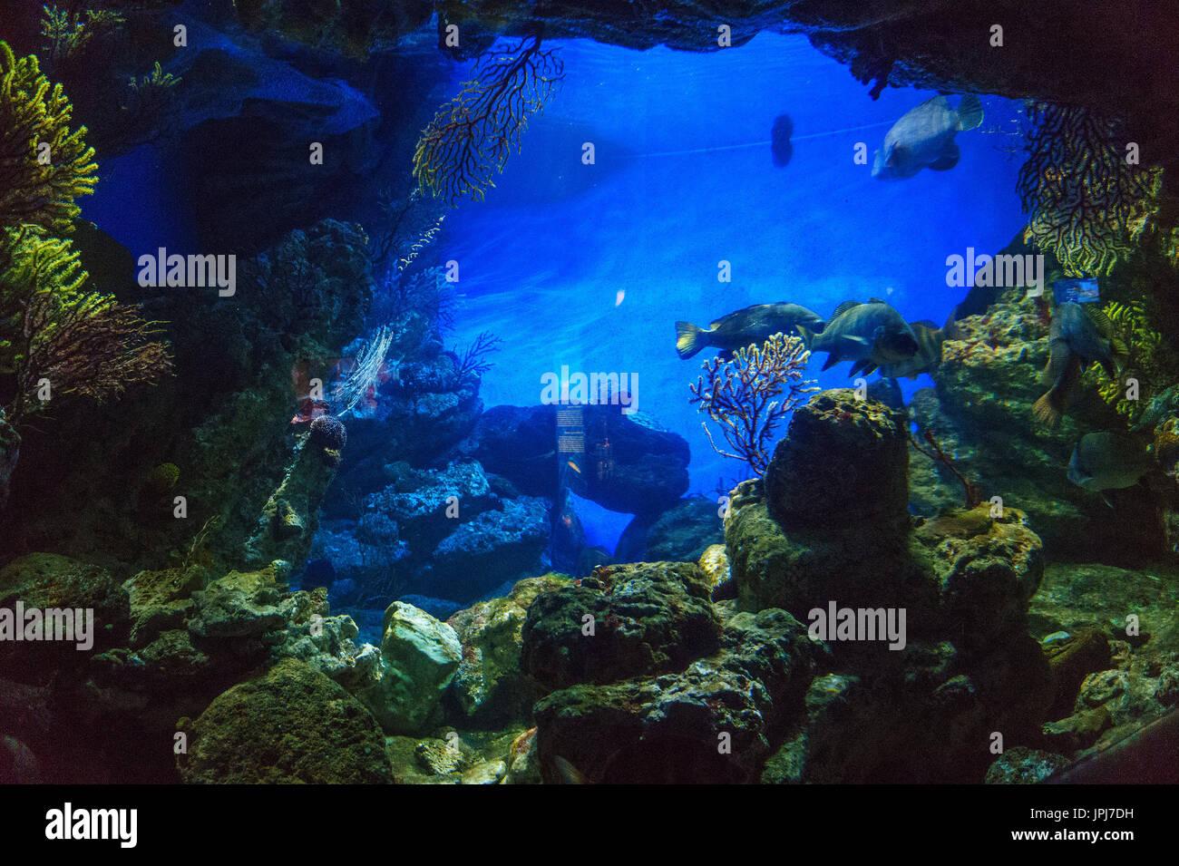 Intérieur de l'Aquarium de Barcelone (L'Aquarium de Barcelone). Son le plus grand aquarium thématique de la méditerranée, situé dans le Port Vell. Photo Stock
