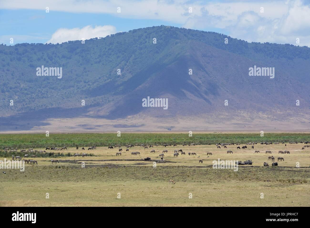 Safari en Tanzanie paysage africain Photo Stock