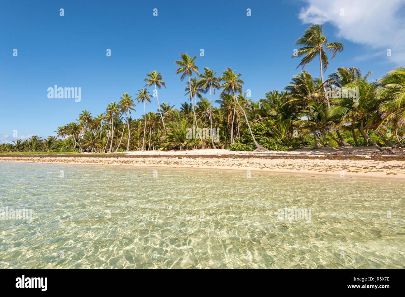 Belle plage des Caraïbes exotiques avec des palmiers en Martinique (Anse Michel) Photo Stock