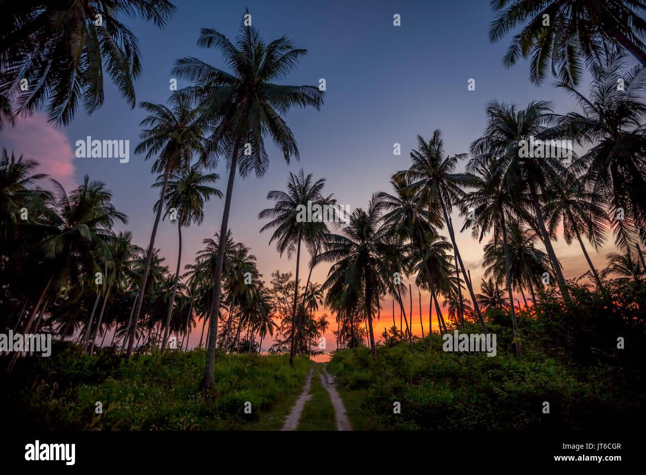 Silhouettes de palmiers tropicaux colorés lors d'un coucher du soleil à Nathon, plage de Laem Yai, Koh Samui, Thaïlande Photo Stock