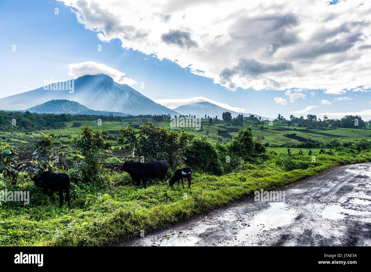 La chaîne de montagnes volcaniques du Parc National des Virunga après la pluie, l'UNESCO World Heritage Site, République démocratique du Congo, l'Afrique Photo Stock
