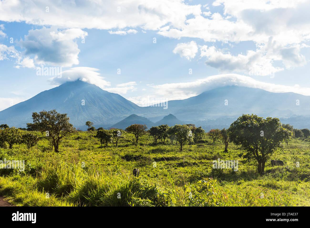 La chaîne de montagnes volcaniques du Parc National des Virunga, site du patrimoine mondial de l'UNESCO, la République démocratique du Congo, l'Afrique Photo Stock