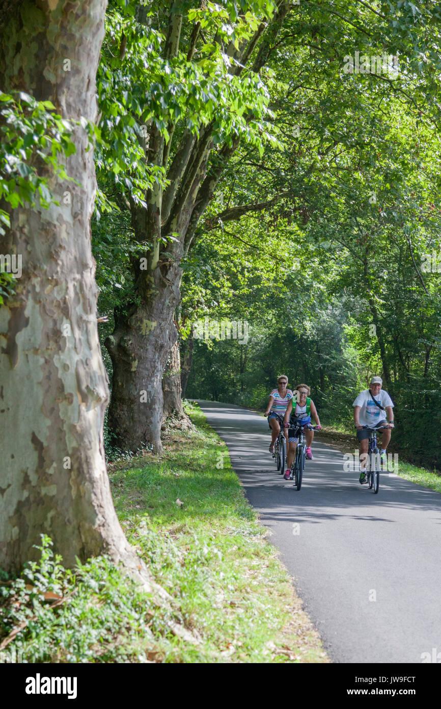 Une famille à vélo doucement le long d'une rangée de plusieurs centaines de platanes centenaires, sur l'ancien chemin de halage de l'Adour (Saubusse - Landes - France). Photo Stock