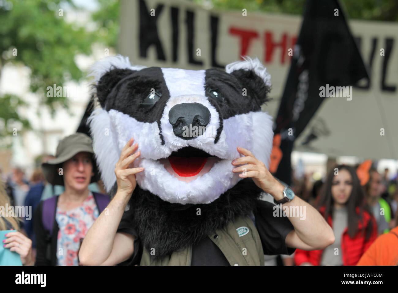 Londres, Royaume-Uni. 12Th Aug 2017. Le Badger Trust, l'histoire de chasse faire coalition et Care2 l'organisation Banque D'Images