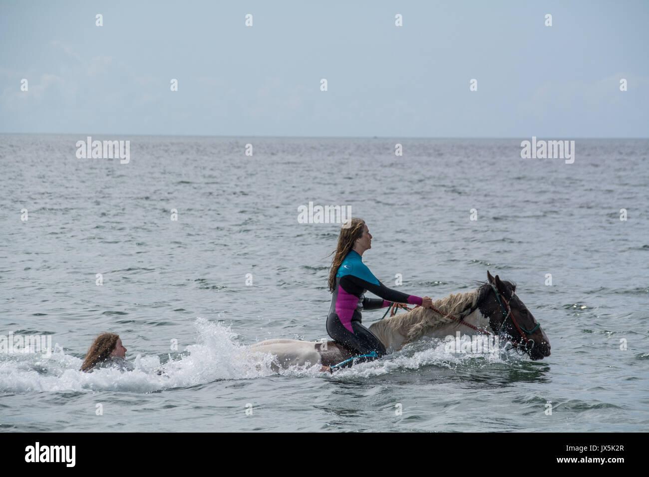 """Longrock, près de Marazion, Cornwall. 15 août 2017. Météo britannique. Le soleil est sorti cet après-midi dans le sud-ouest de Cornwall. Dans Mounts Bay personnes nageaient sur les chevaux, y compris Mea Sucato qui ont piloté de New York à Cornwall en particulier pour un anniversaire traiter d'aller dans les eaux au large de Long rock, en face de l'emblématique St Michaels Mount. Mea vu ici étant """"remorqué"""" derrière l'un des chevaux. Crédit: Simon Maycock/Alamy Live News Photo Stock"""