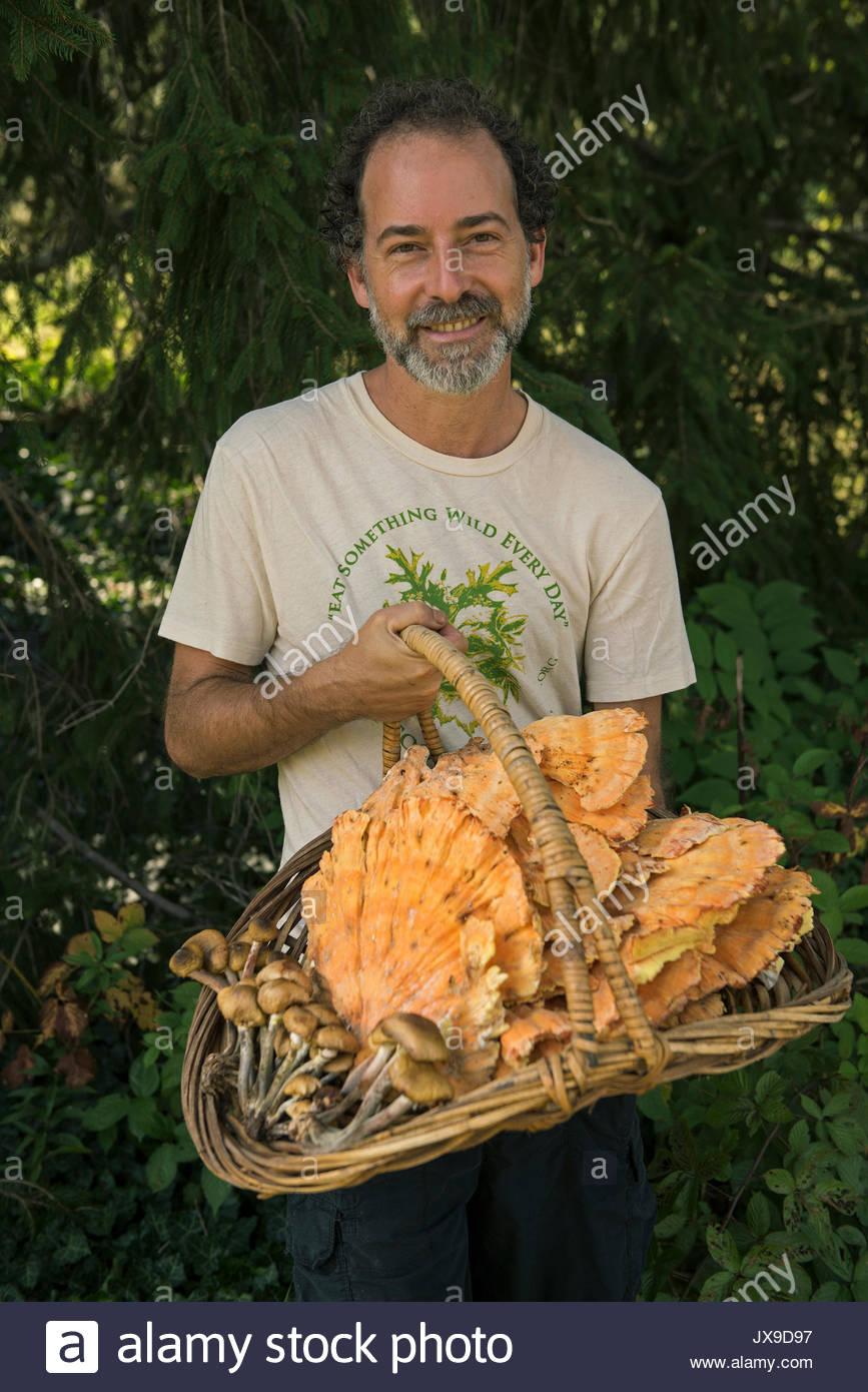 Un homme détient un panier de champignons des bois de poulet Miel et les champignons. Photo Stock