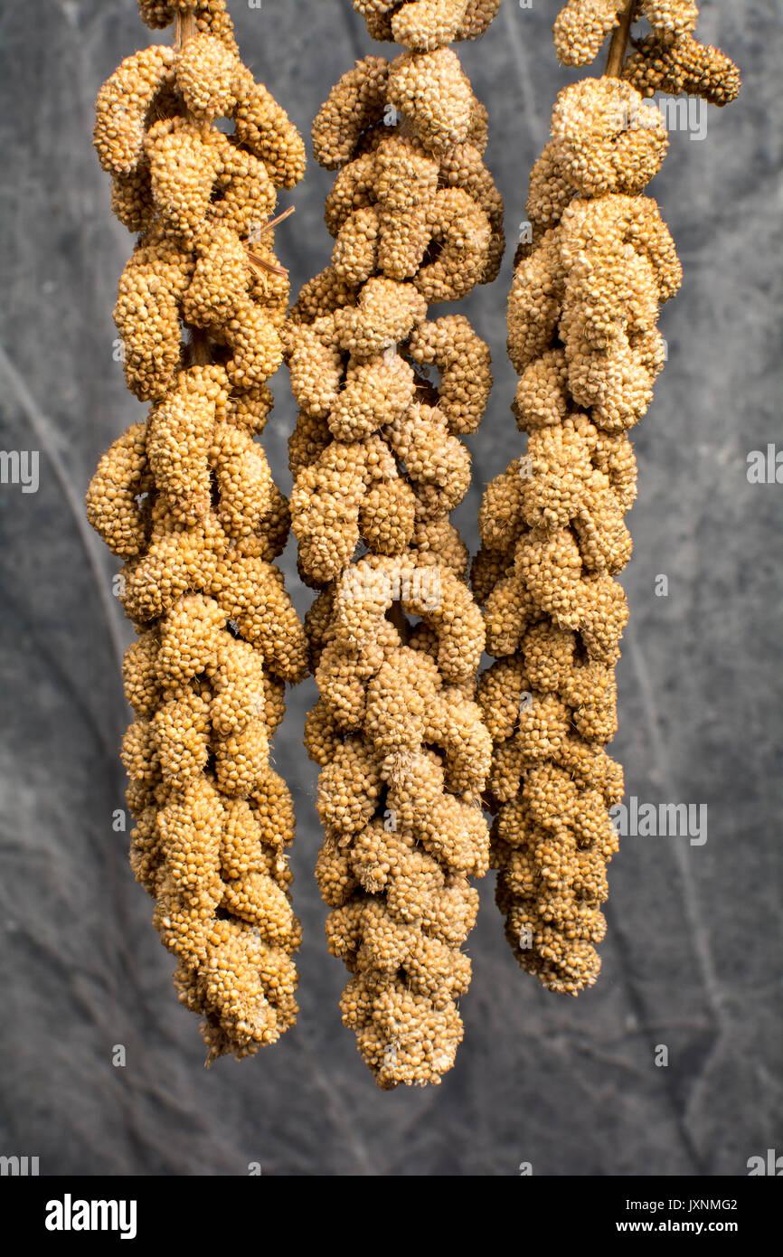Les pulvérisations de millet pour perruches Photo Stock