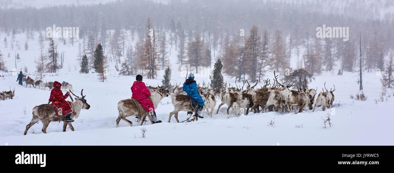 La Mongolie, Khövsgöl privince, les Tsaatan, gardien de rennes, migration d'hiver Photo Stock