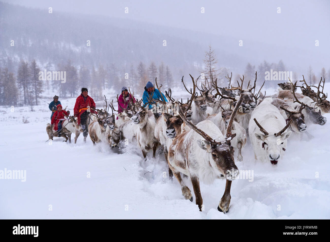 La Mongolie, province Khövsgöl, le gardien de rennes, Tsaatan, migration d'hiver, la transhumance Photo Stock