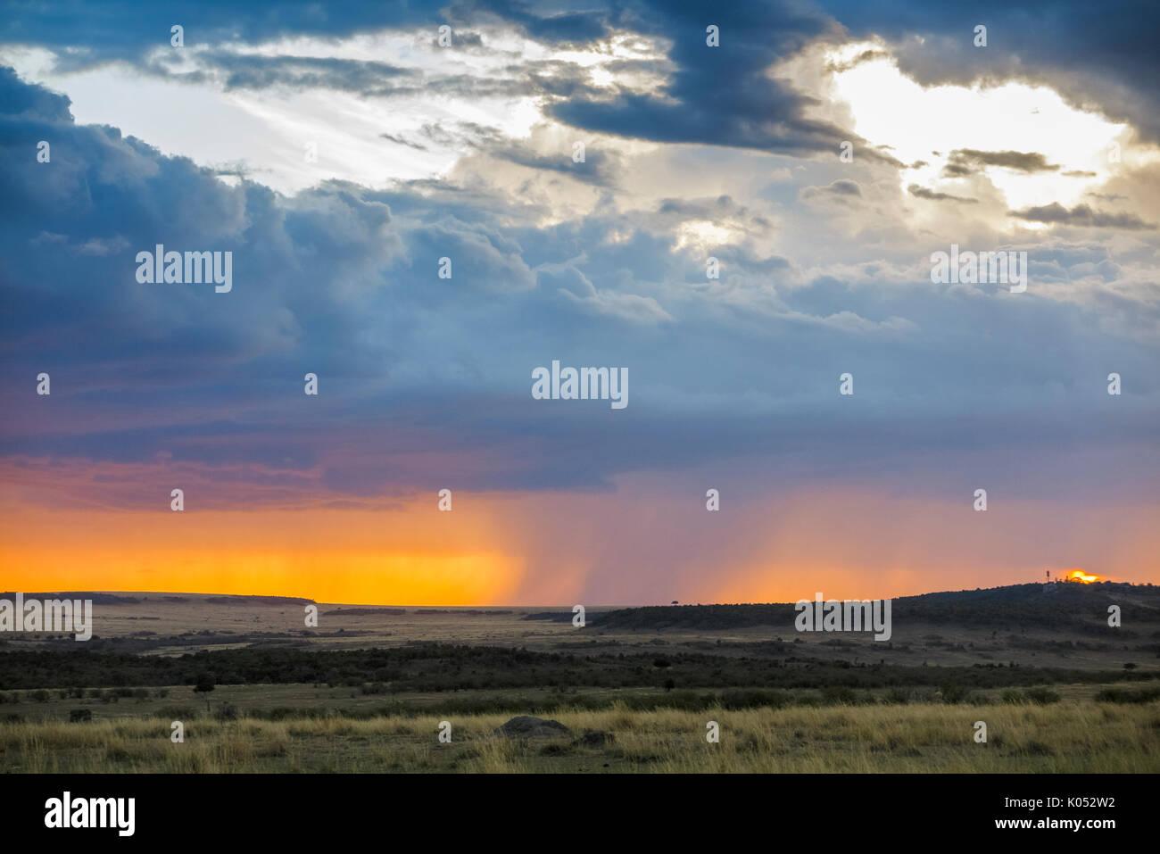 Vue paysage panoramique: gris nuages de tempête de recueillir plus de la savane avec pluie imminente au coucher du soleil, Masai Mara, Kenya Banque D'Images
