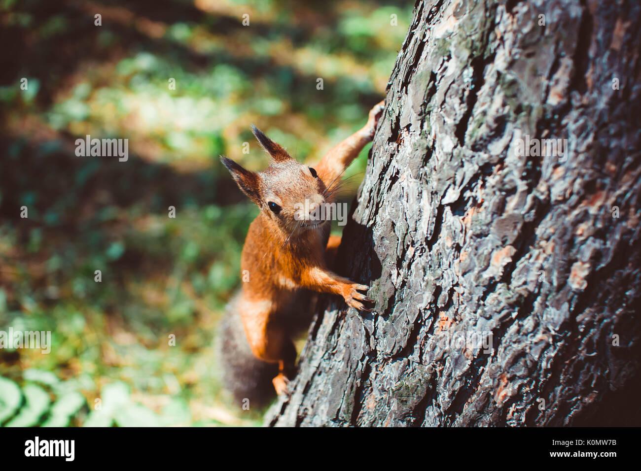 Les petits rongeurs sur le tronc d'un arbre Photo Stock