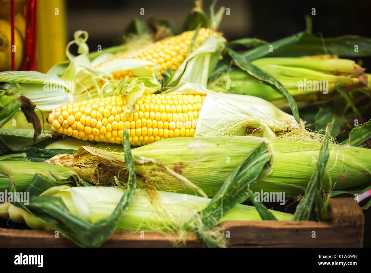 Des épis de maïs, la récolte de la rue du marché Photo Stock