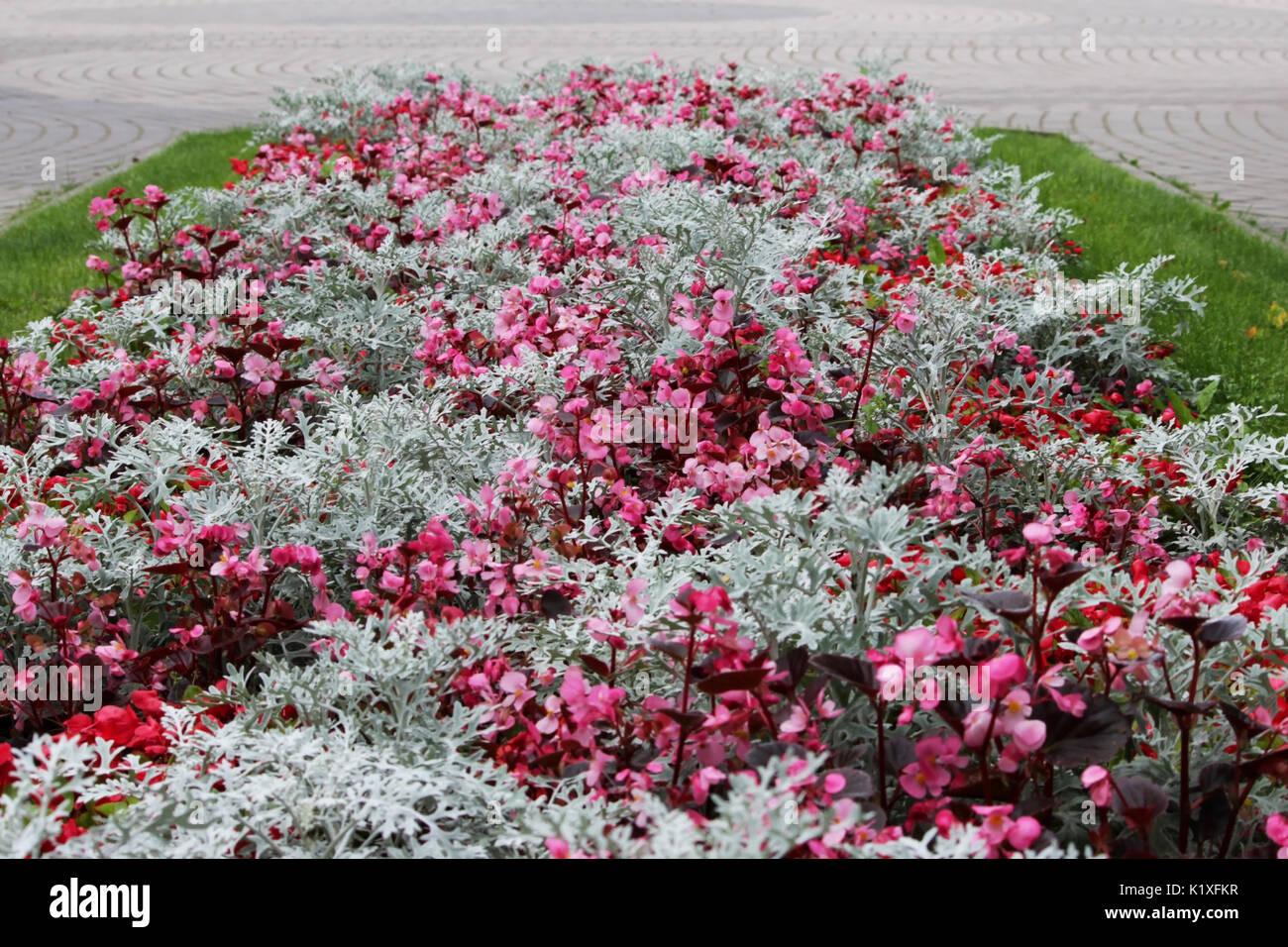 Une variété de motifs et dessins de fleurs de différentes ...