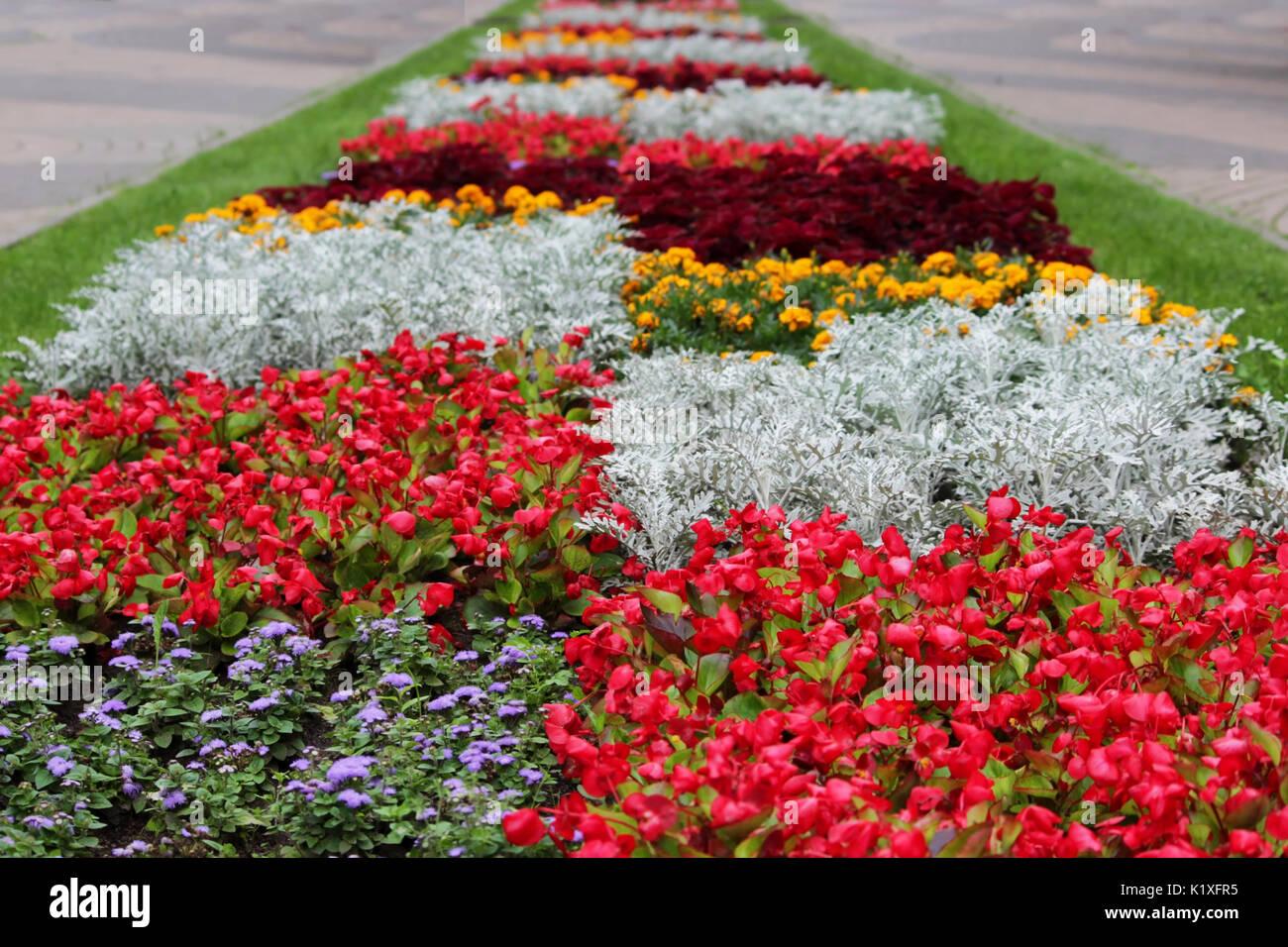 Une variété de motifs et dessins de fleurs de différentes couleurs ...