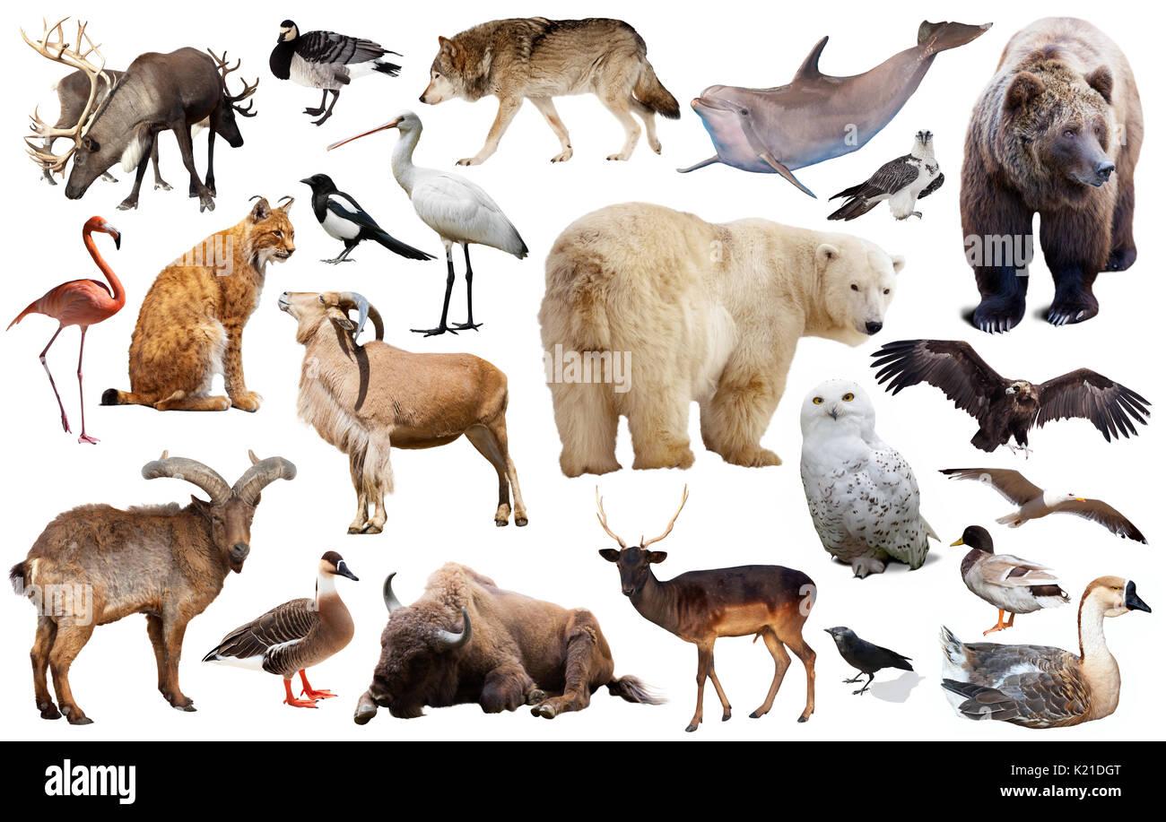 ensemble de diff rents pays de l 39 isol sur blanc les animaux sauvages y compris les oiseaux et. Black Bedroom Furniture Sets. Home Design Ideas