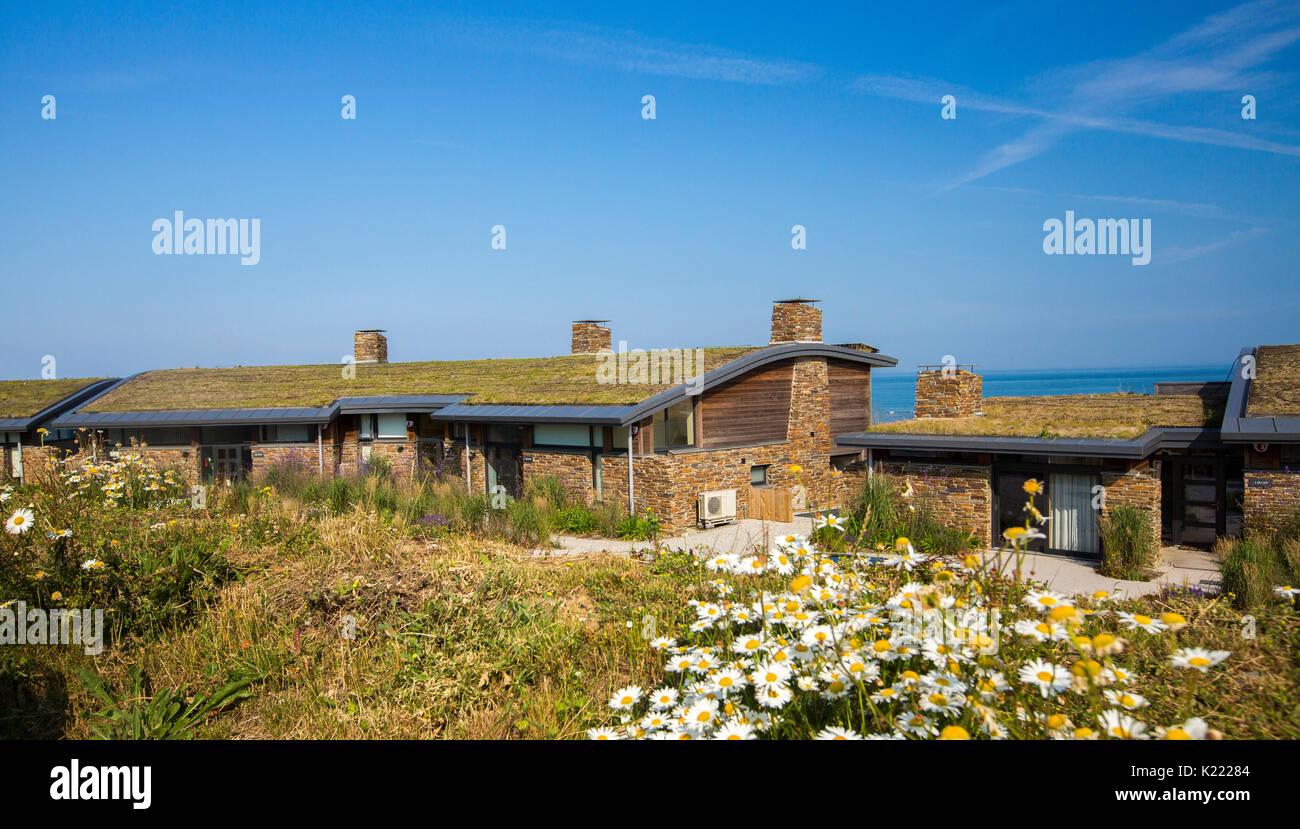 Maison moderne / bungalow avec toit de chaume isolation toit vivant ...