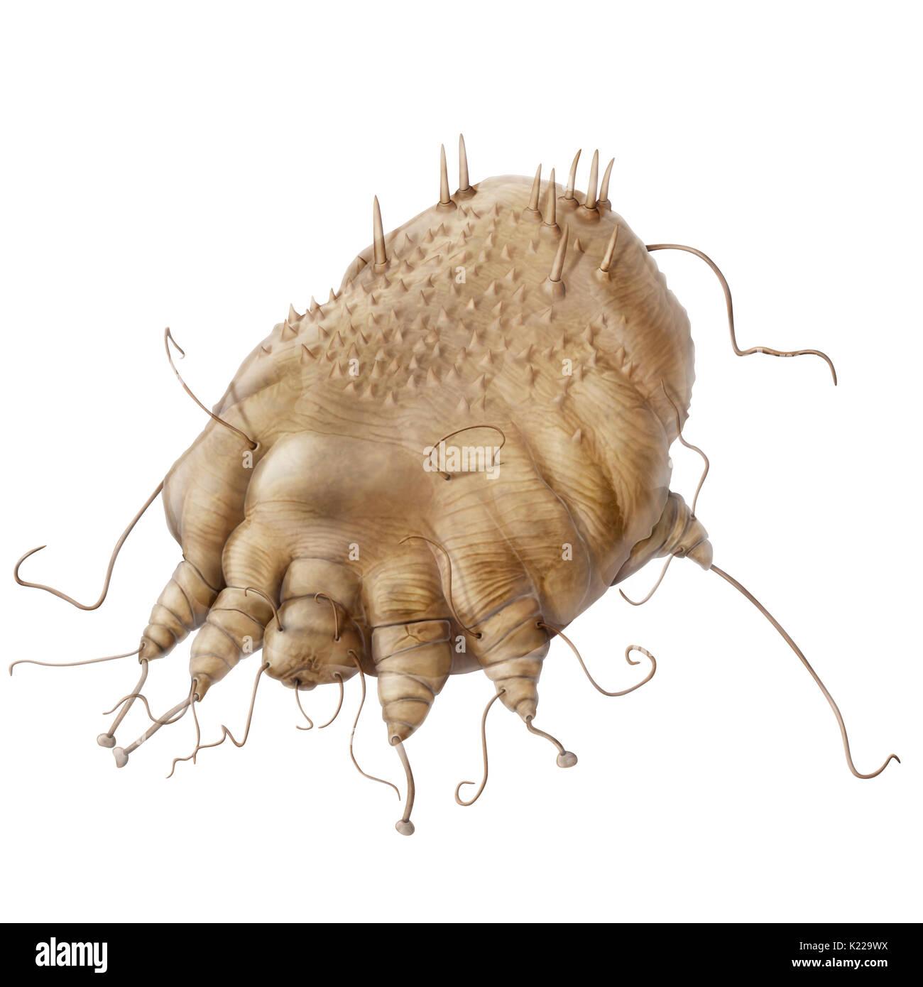 La gale est une maladie de la peau causée par un acarien ...