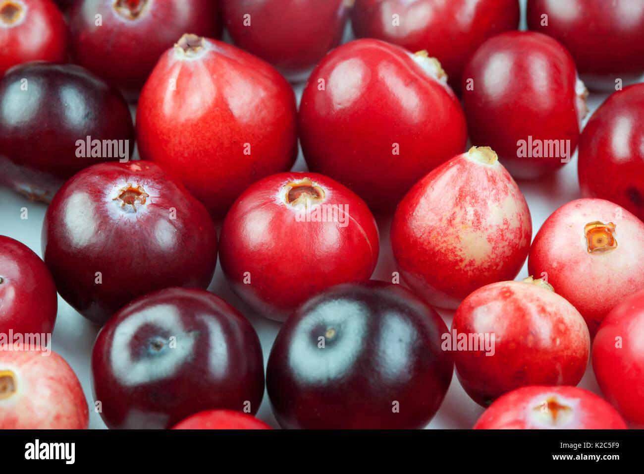 La variation de forme couleur canneberge sauvage. Les baies mûres rouge. vue macro copie espace. studio photo Photo Stock