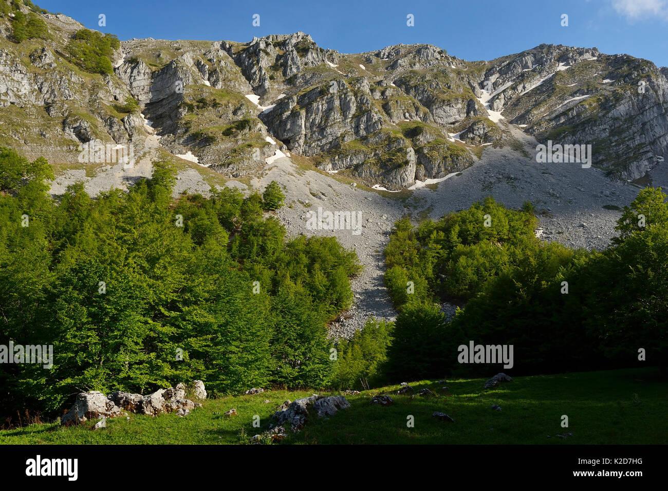 Des Apennins centrales Rewilding, Région Lazio e Molise Parc National, Abruzzes, Italie. Juin 2014. Photo Stock