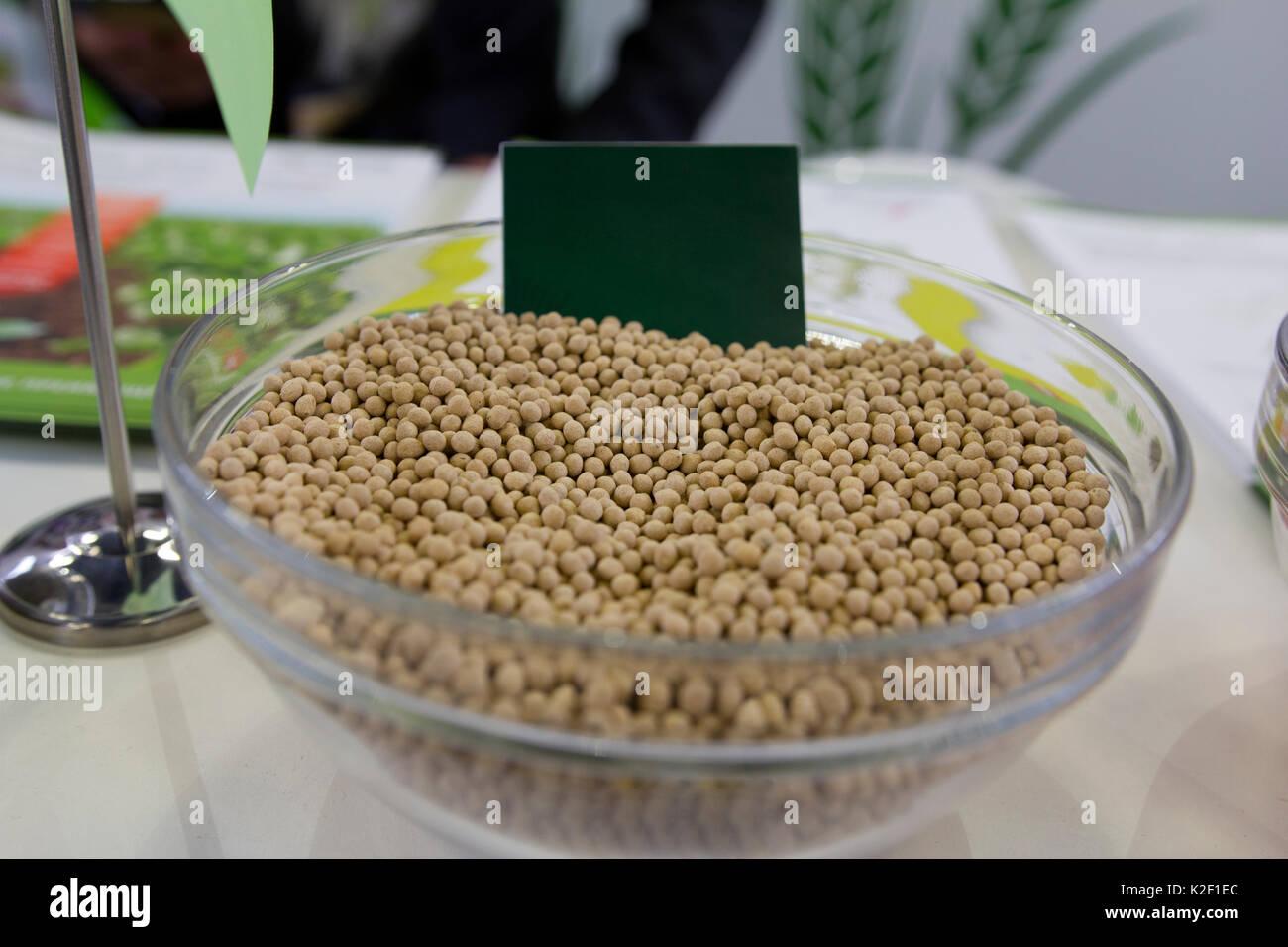 Millet génétiquement modifiés dans la soucoupe en verre concept agricole Photo Stock