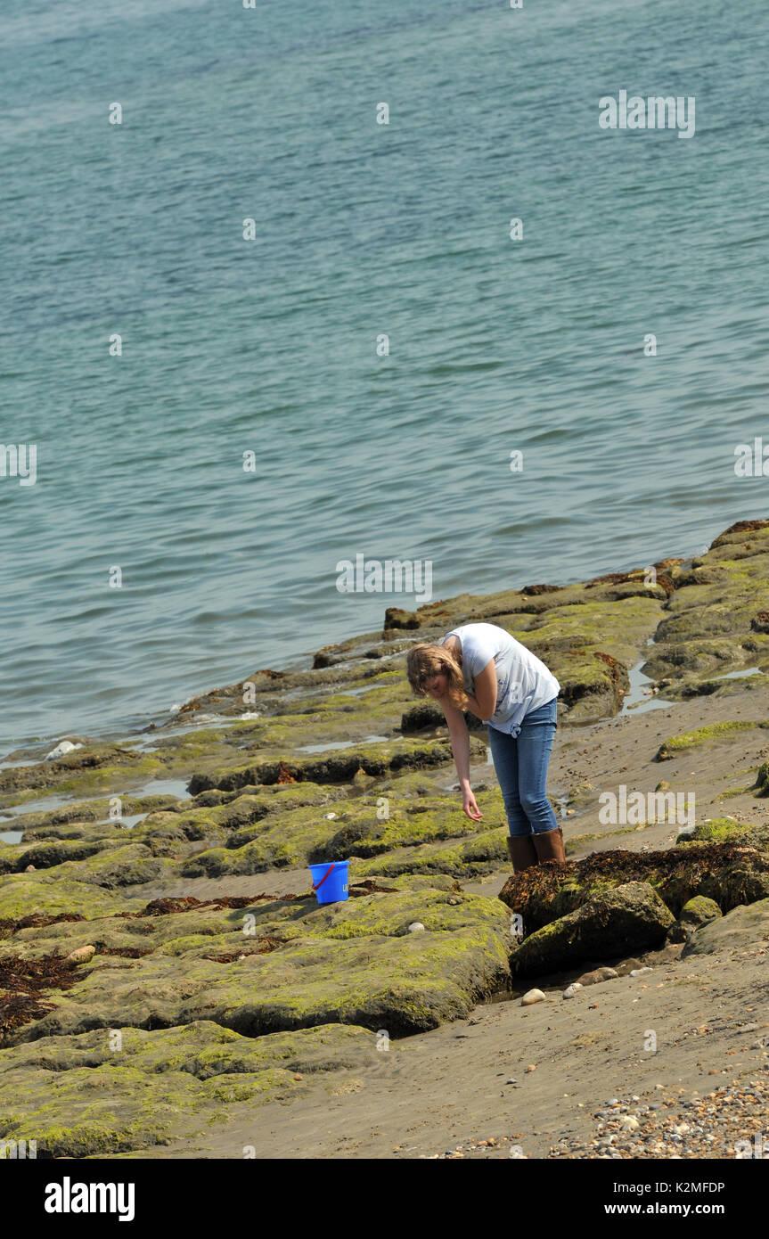 Une jeune femme ou une jeune fille à la recherche de créatures et coquilles dans rockpools sur la plage à marée basse dans l'été portant un t shirt manches courtes ou Photo Stock