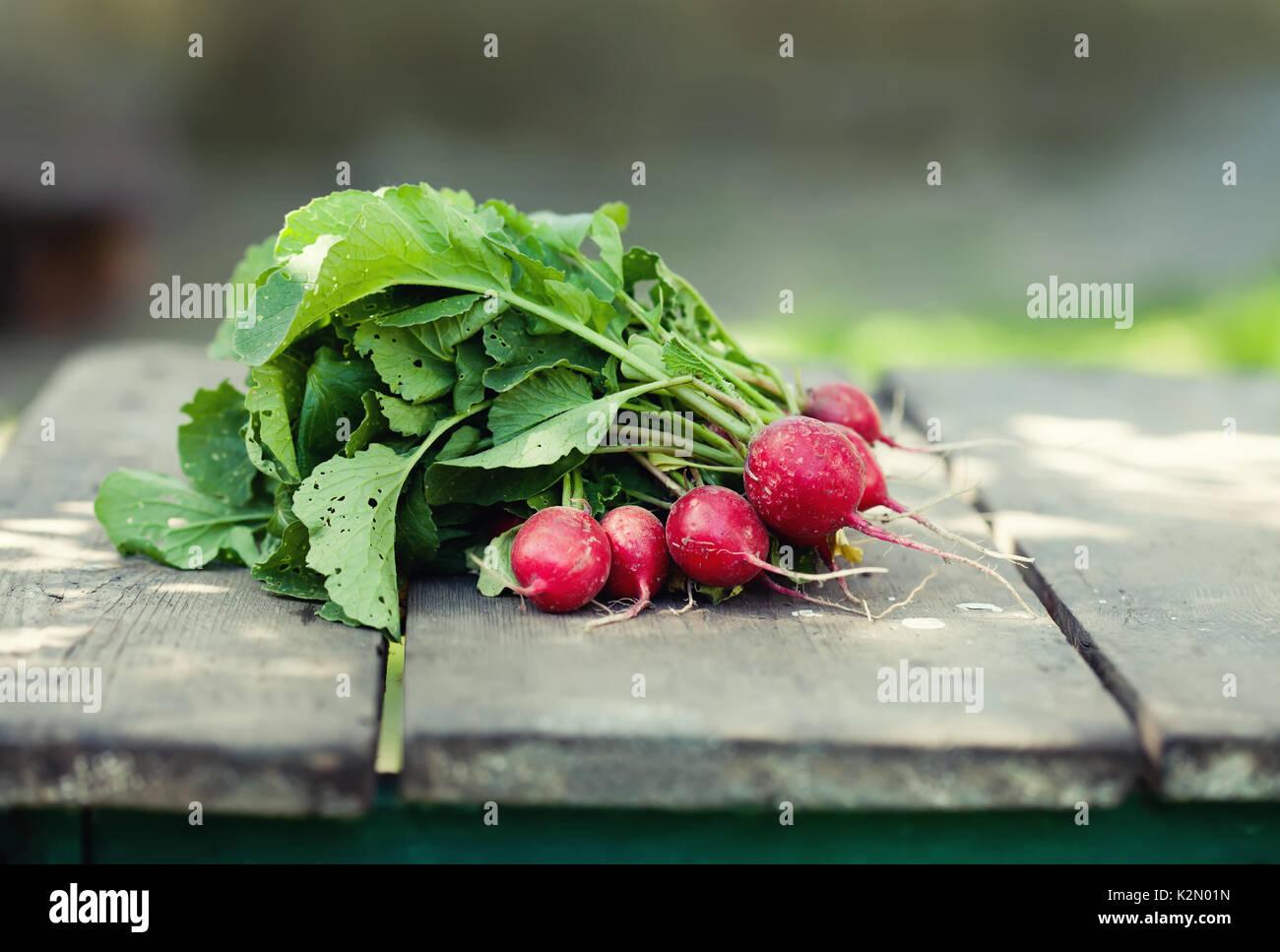 Radis mûrs sur fond de table en bois. L'alimentation de la vie des agriculteurs encore. Peu de profondeur champ, selective focus Photo Stock