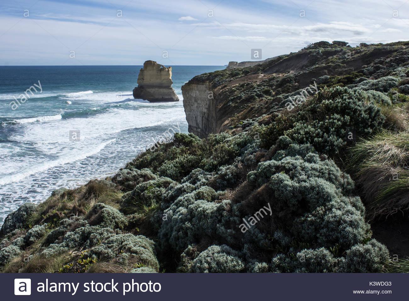 La végétation côtière dans les douze apôtres à Port Campbell National Park, à Victoria, en Australie. Photo Stock